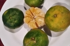 Costa-Rica-Food-24