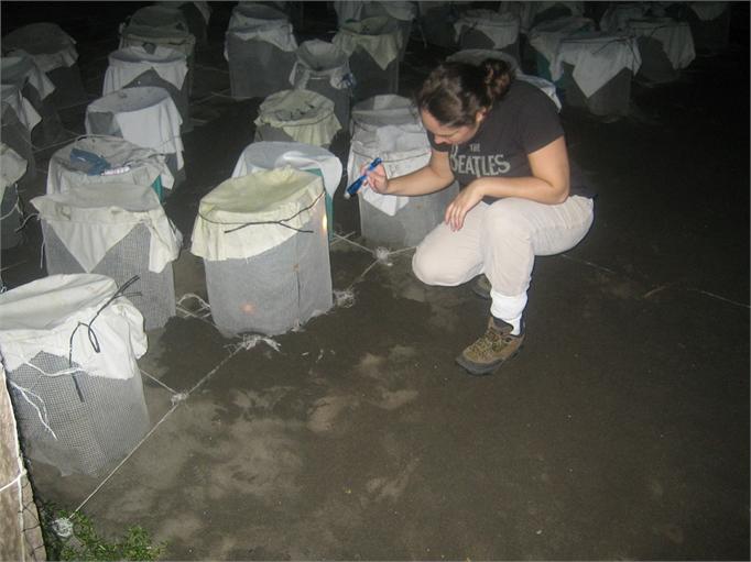 sea-turtles-costa-rica-09