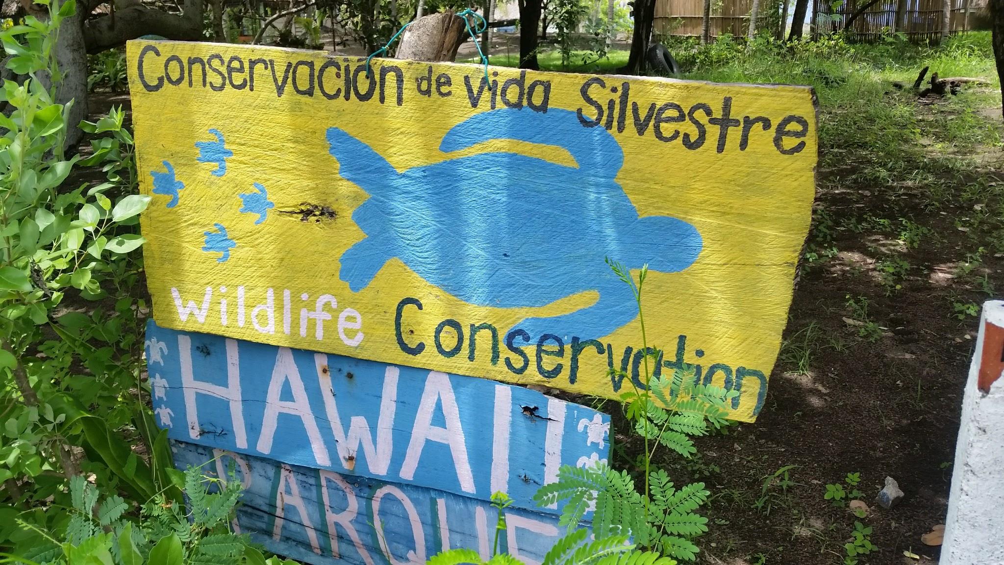 guatemala-monterrico-sea-turtle-conservation14