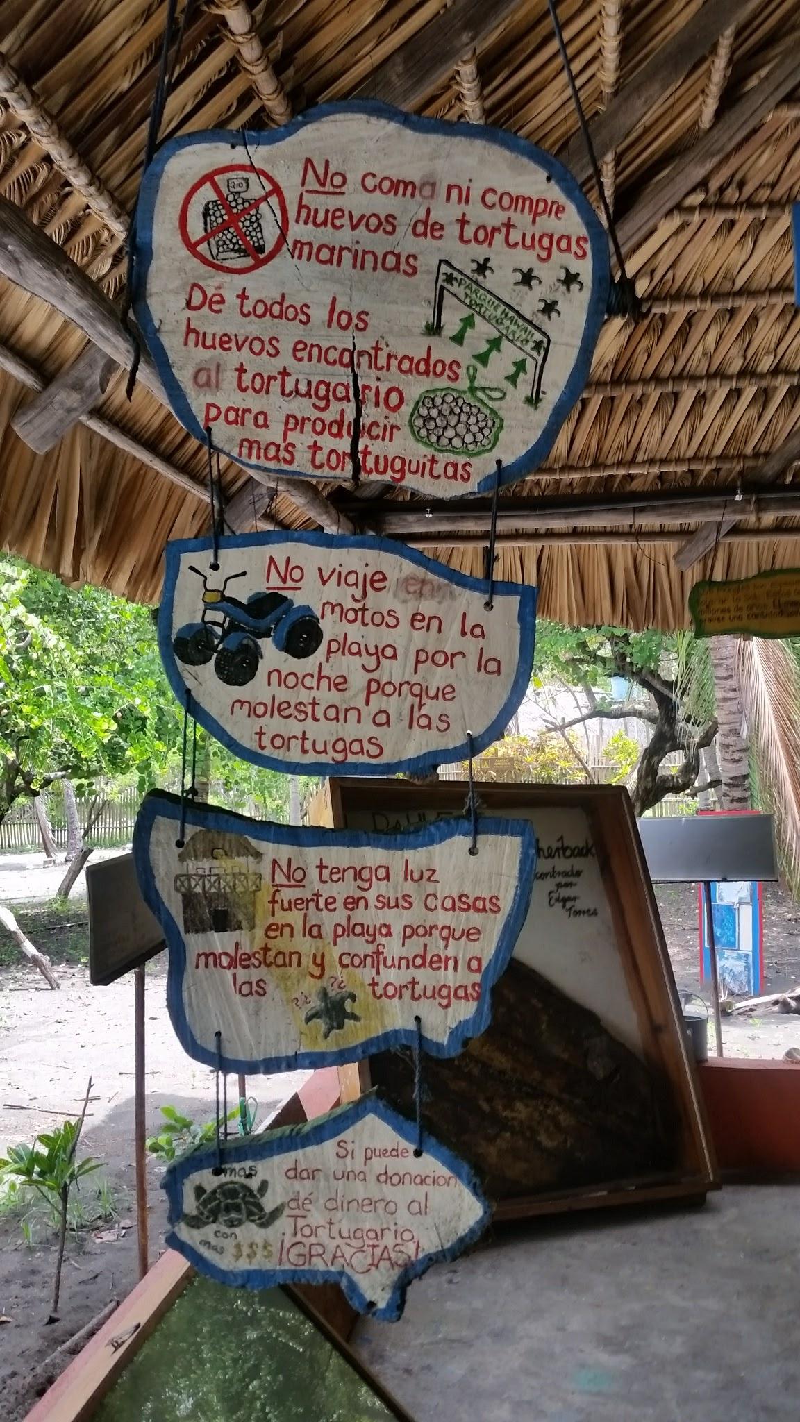 guatemala-monterrico-sea-turtle-conservation15