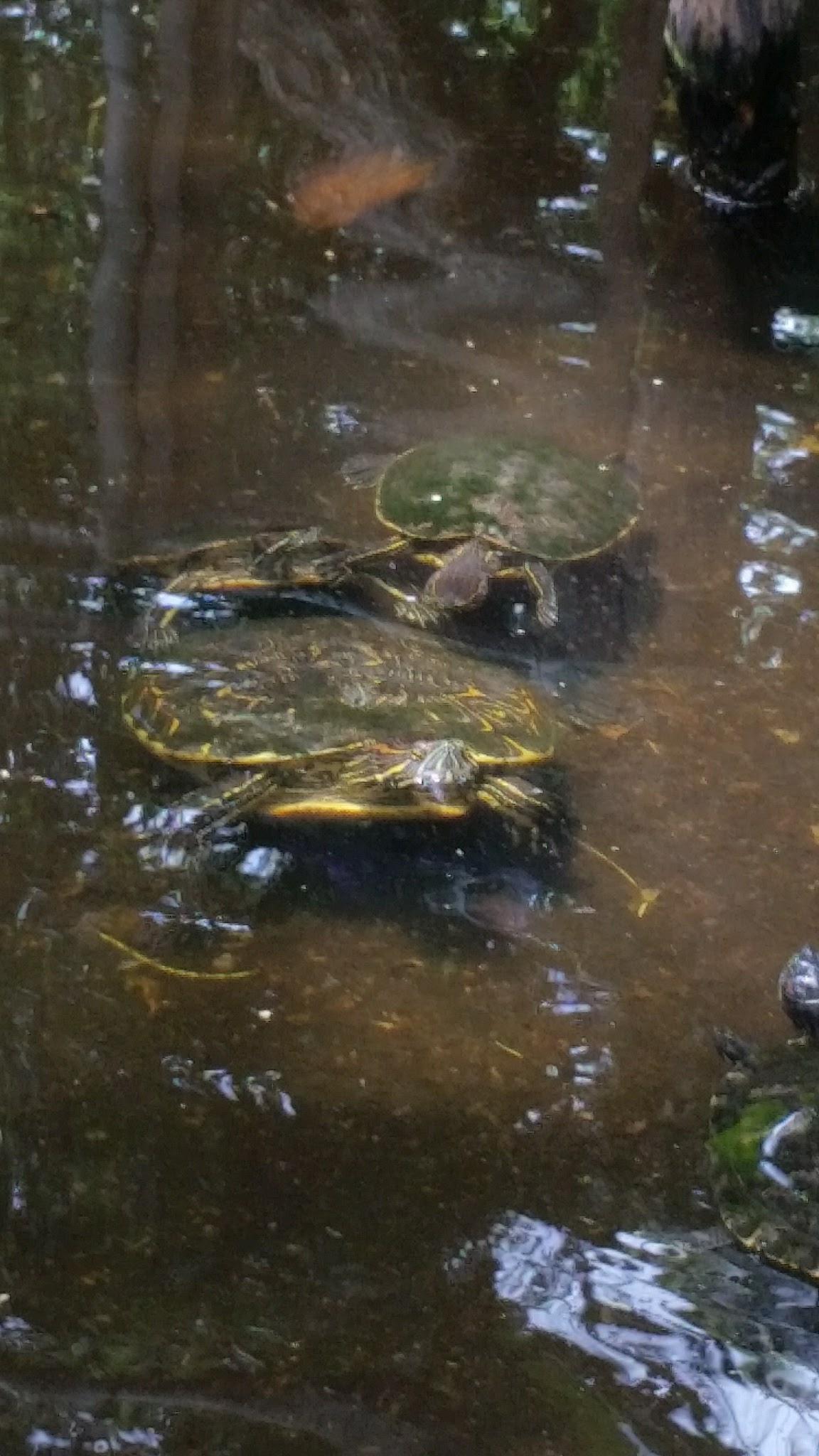 guatemala-monterrico-sea-turtle-conservation33
