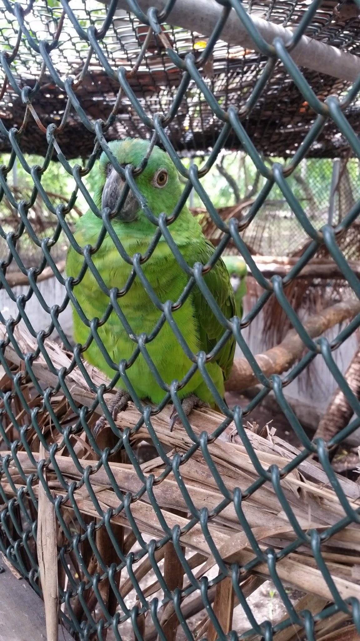 guatemala-monterrico-sea-turtle-conservation36