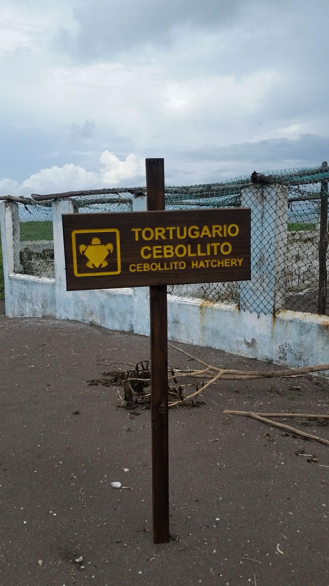 guatemala-monterrico-sea-turtle-conservation65