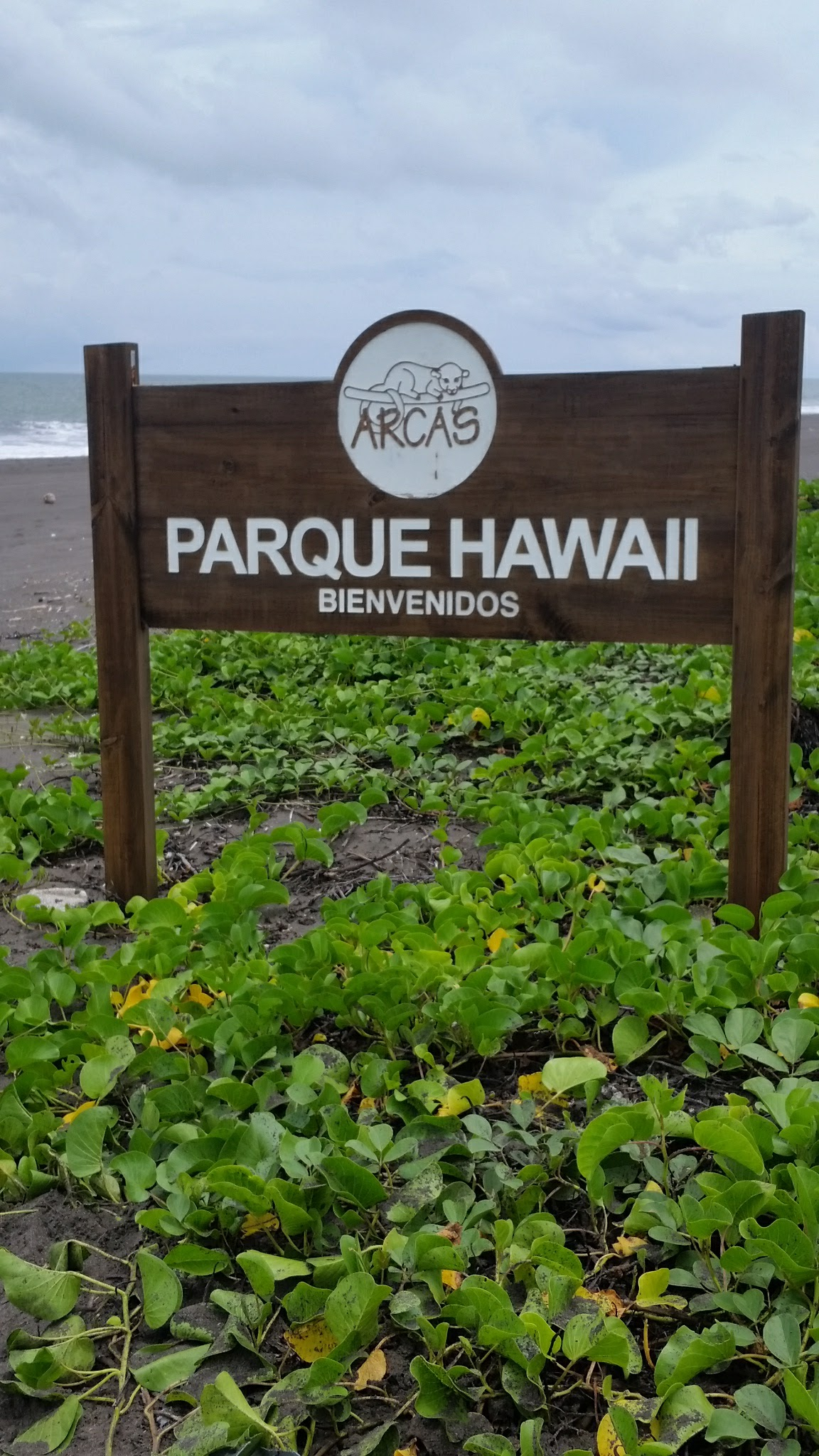guatemala-monterrico-sea-turtle-conservation75