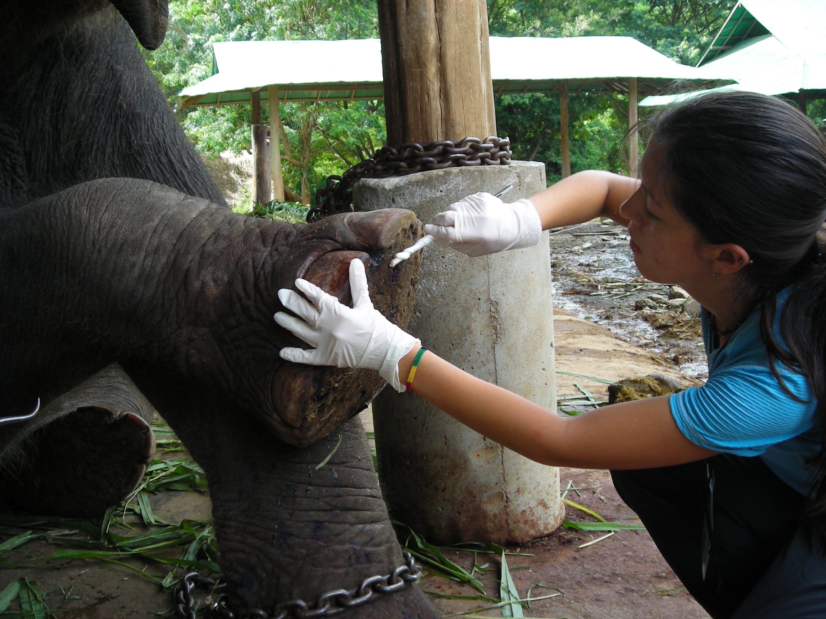 Thailand Elephant Camp Chiang Mai Cleaning Foot