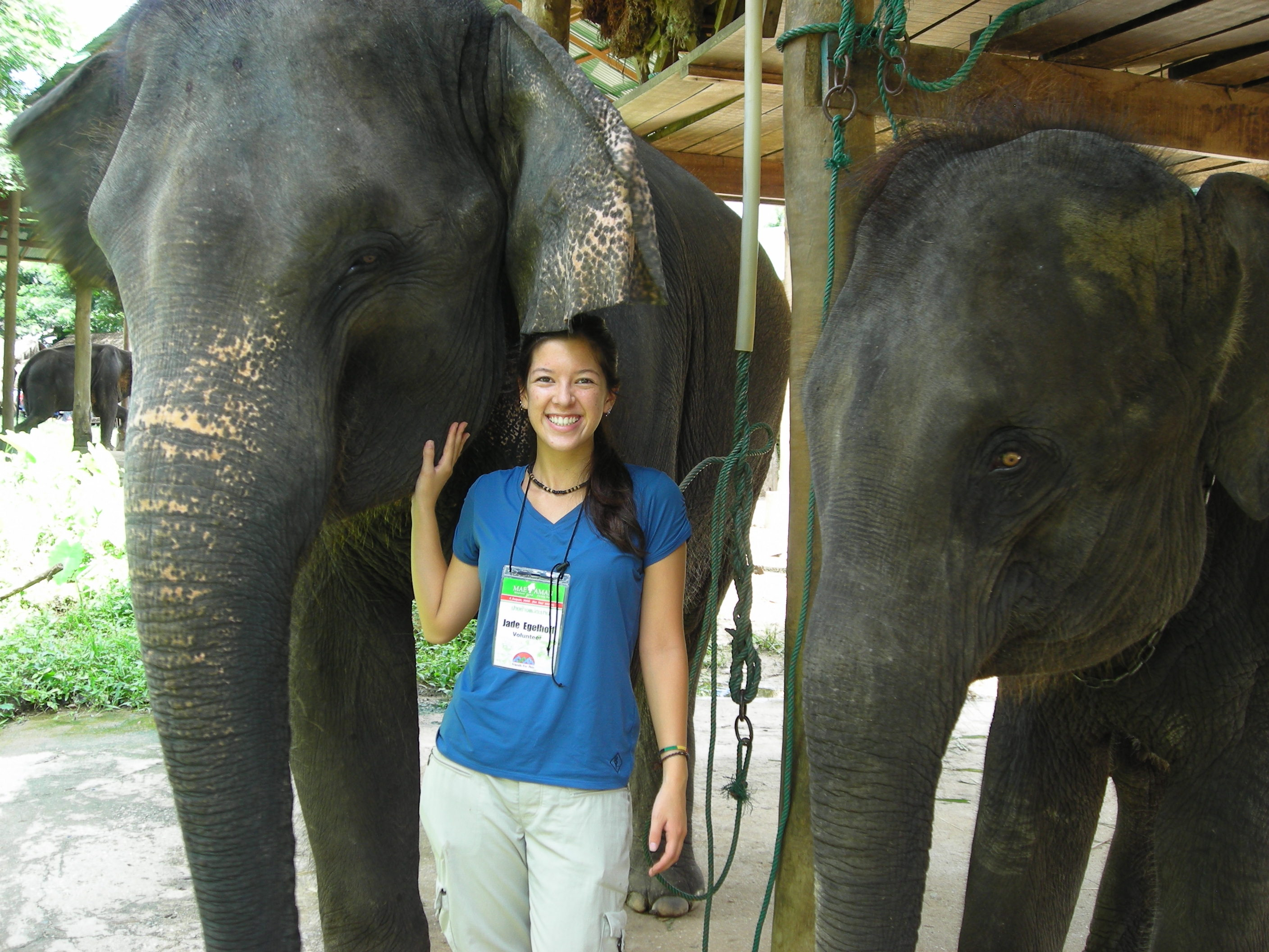 Thailand Elephant Camp Chiang Mai Two Friends