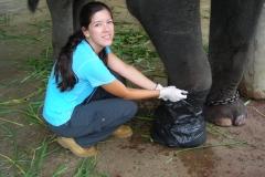 Thailand Elephant Camp Chiang Mai Feet
