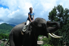 Thailand Elephant Camp Chiang Mai Riding