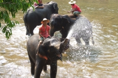 Thailand Elephant Camp Chiang Mai Splashing Water