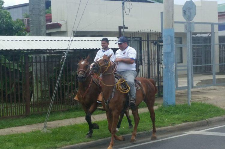 Horses in San Jose Costa Rica